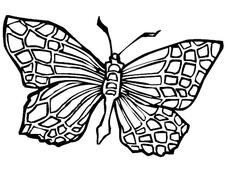 butterfly coloring book images