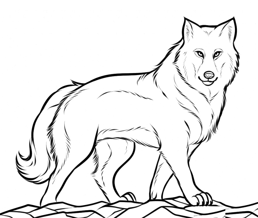 benefits of wolf coloring pages coloring pages free