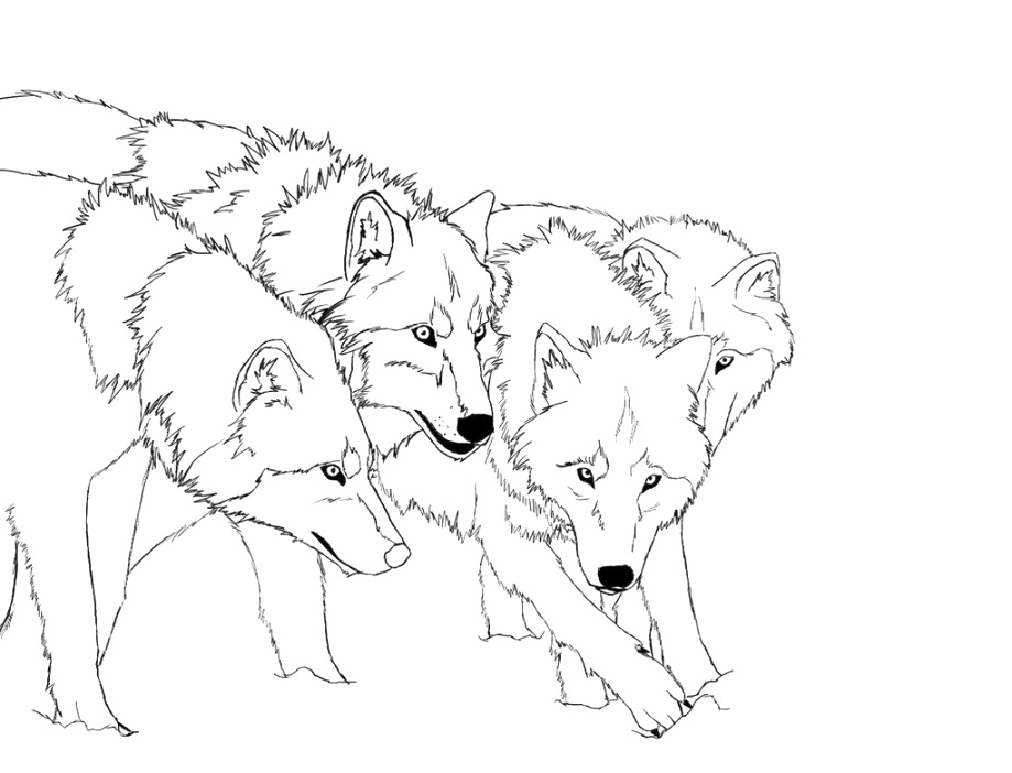 best wolf coloring pages download for free