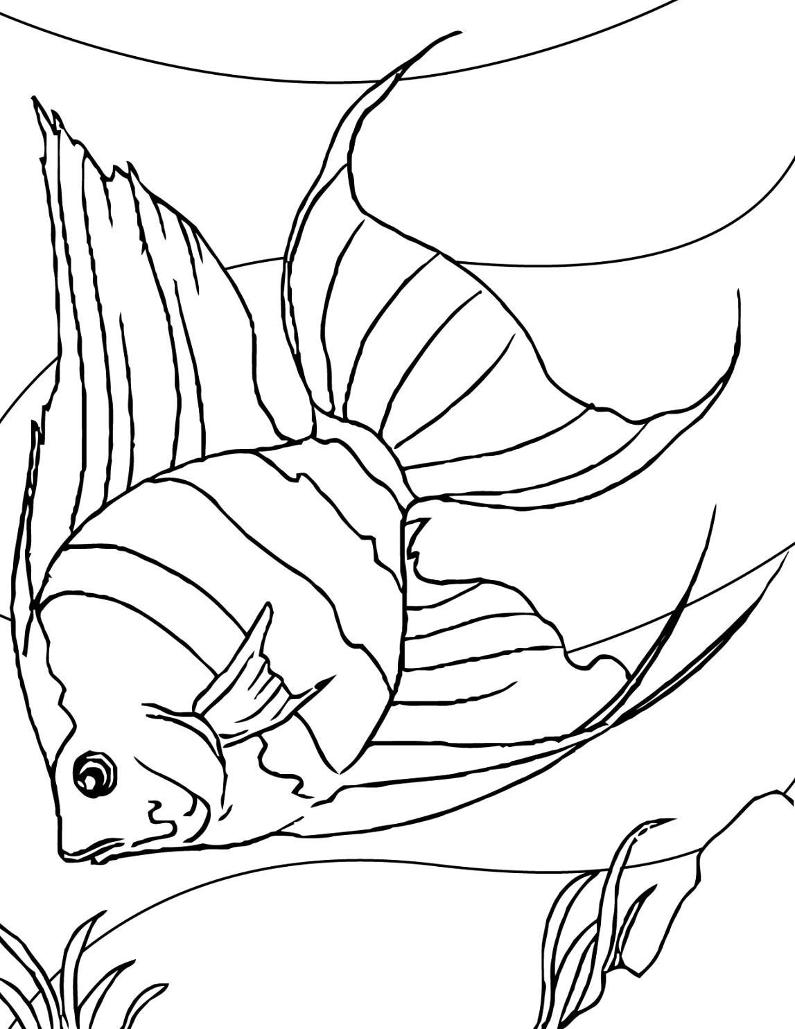 great fish coloring pages to color your life