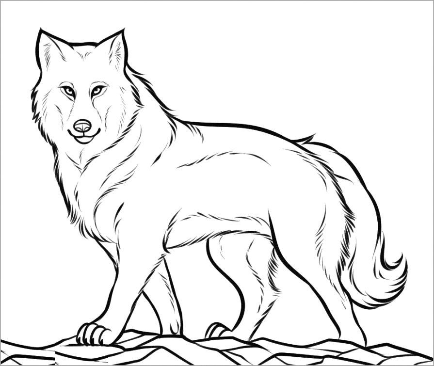 beautiful wolf coloring pages collection