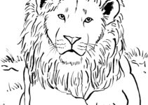Lion Coloring Pages Coloring Pages Archives