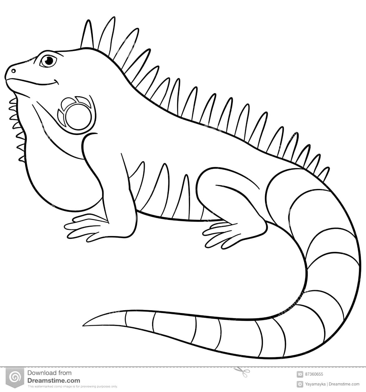 Simply download iguana coloring page for toddler