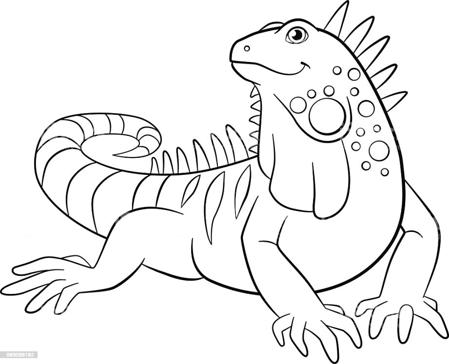 The best iguana coloring page Printable Coloring Page