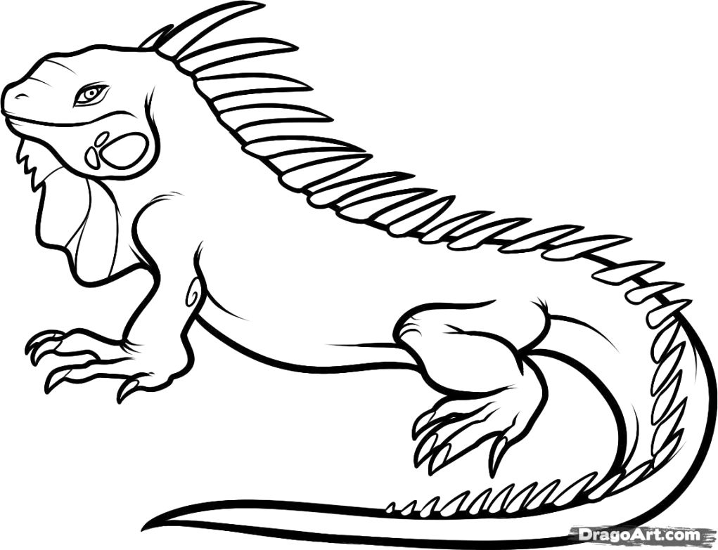 Make your iguana coloring page to color free